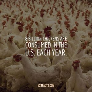 8 billion chickens are consumed in the U.S. each year.