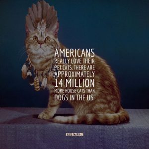Americans really love their pet cats. There are approximately 14 million more house cats than dogs in the US