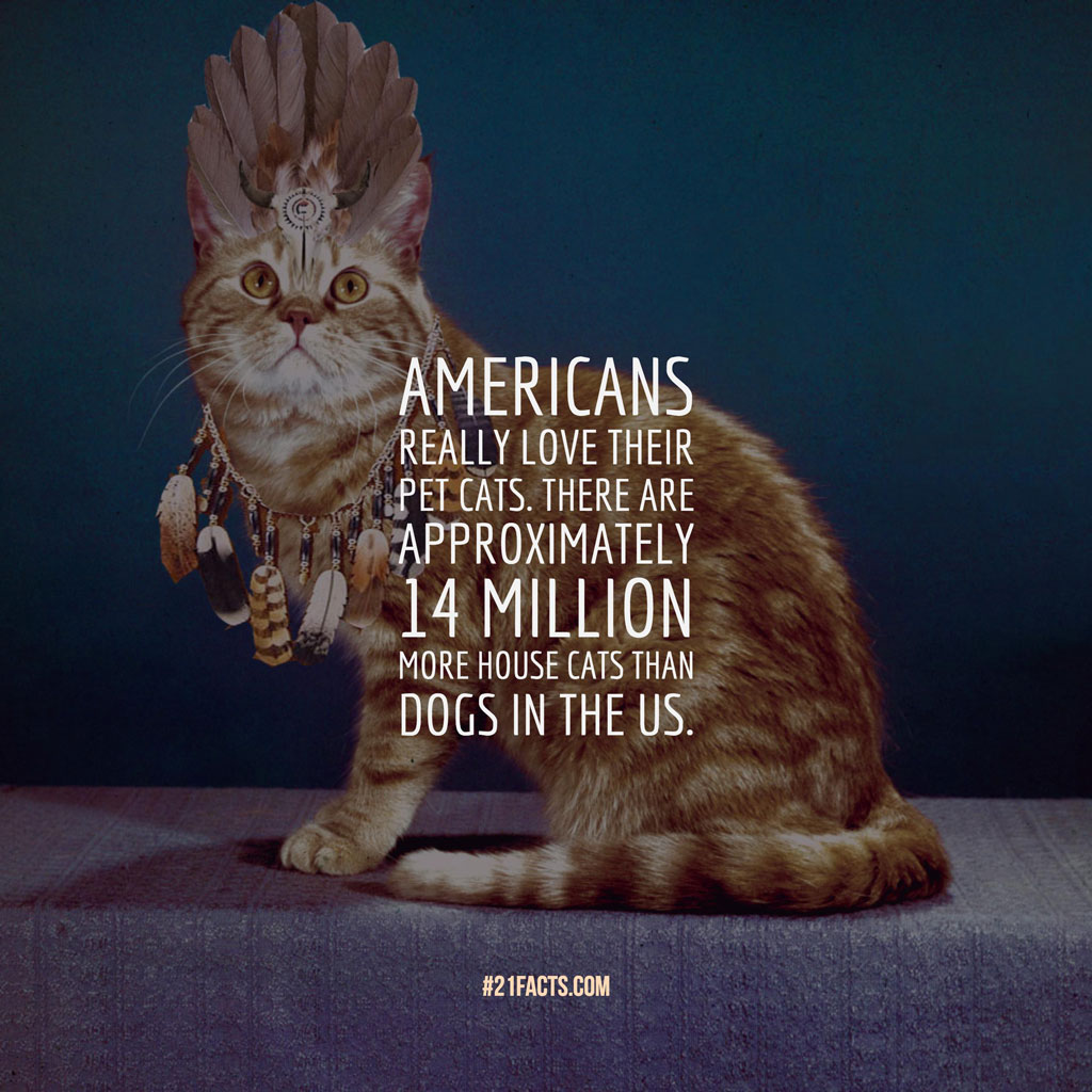 Interesting facts about Cats: Americans really love their pet cats. There are approximately 14 million more house cats than dogs in the US