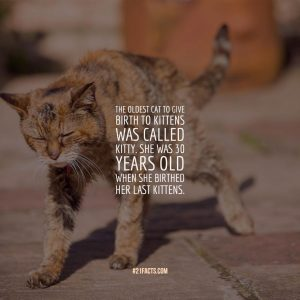 The oldest cat to give birth to kittens was called Kitty. She was 30 years old when she birthed her last kittens