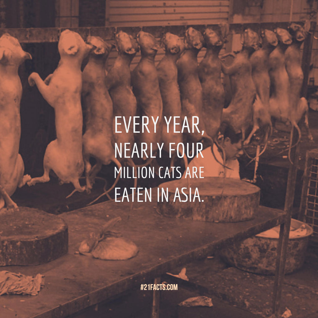 Every year, nearly four million cats are eaten in Asia.