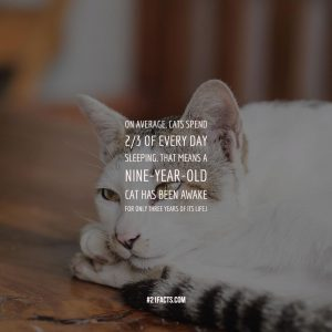 On average, cats spend 2/3 of every day sleeping. That means a nine-year-old cat has been awake for only three years of its life