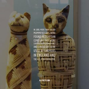 In 1888, more than 300,000 mummified cats were found an Egyptian cemetery. They were stripped of their wrappings and carted off to be used by farmers in England and the U.S. for fertilizer