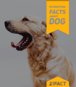 Facts about your Dogs