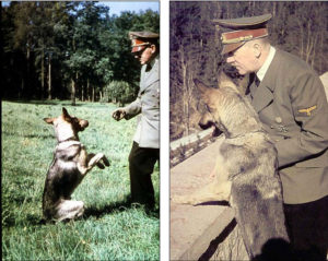 The Nazis tried to teach dogs to talk and read